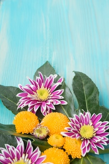 Yellow and purple chrysanthemum flowers on green leaves over wooden backdrop
