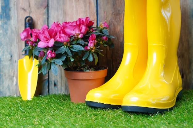 Желтые резиновые сапоги, садовая лопата и цветущий цветок азалии на зеленой траве.