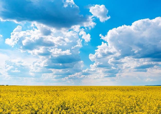 Желтое поле рапса и голубое небо с облаками в солнечный день
