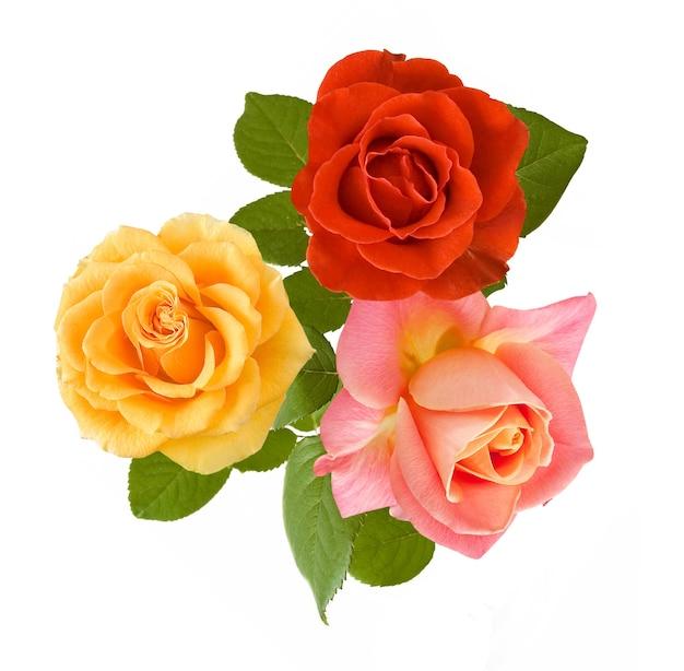 Букет желтых, красных и розовых роз на белом фоне