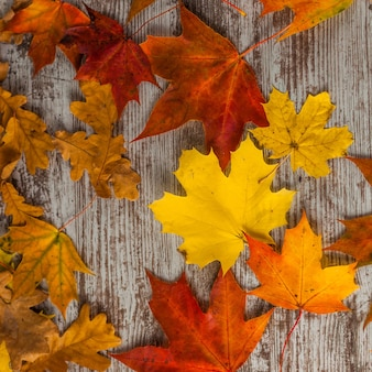 Yellow red oak maple autumn leaves. on wooden surface. texture