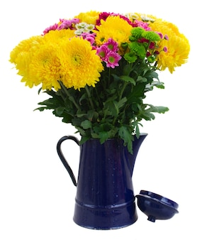 Yellow, red and pink  chrysanthemum flowers in blue pot isolated on white background