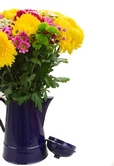 Yellow, red and pink  mum flowers in blue pot isolated on white background