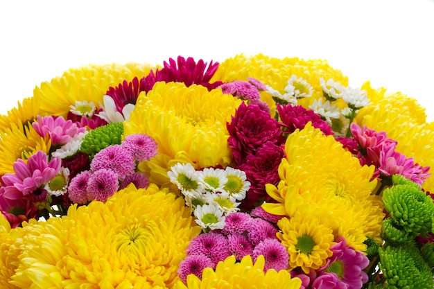 Yellow, red and pink  mum flowers border isolated on white background