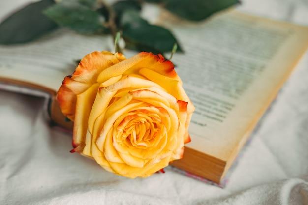 책에 노란색-빨간색 장미
