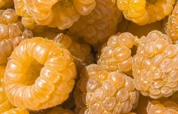 黄色の熟したラズベリーのクローズアップラズベリーの背景