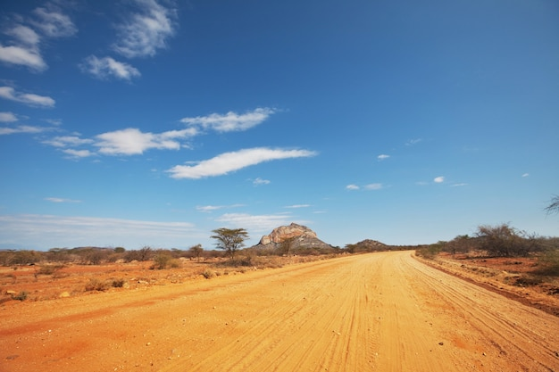 Желтая дорога в африканской саванне, кения