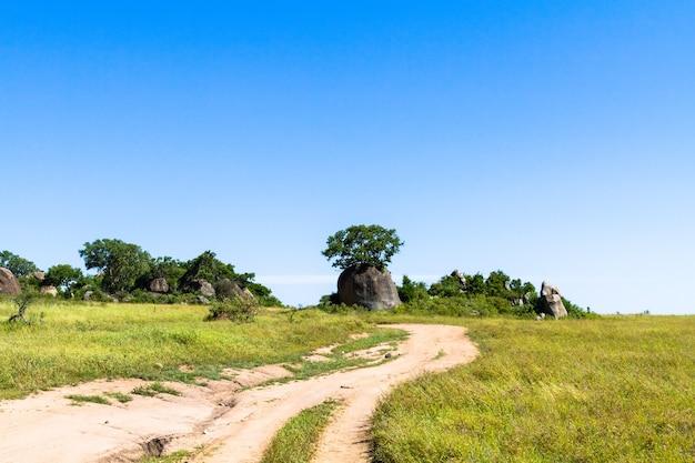 Желтая дорога в саванне серенгети. танзания, африка