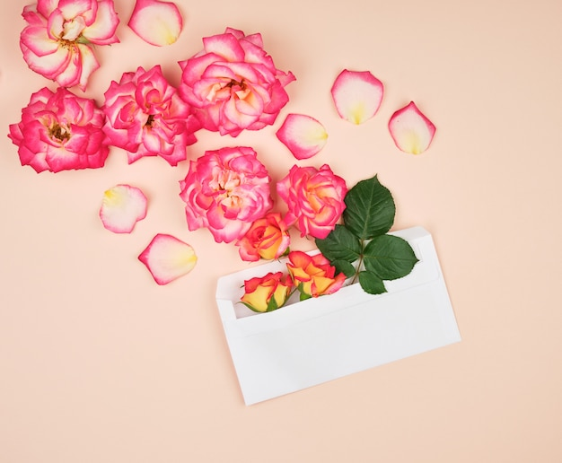 Yellow rose buds and a white paper envelope on a peach