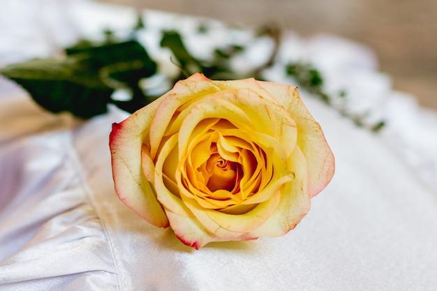 白い背景の上の黄色いバラ。ホリデーギフト_
