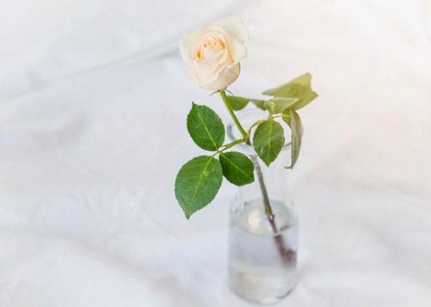 Yellow rose standing in glass vase on table