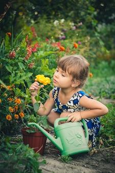 Yellow rose young gardener