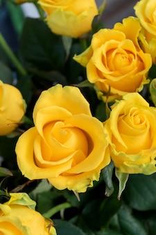 Желтые розы. праздники и концепция празднования.