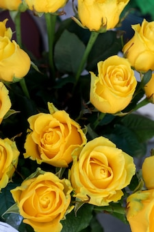 Yellow roses. holidays and celebration concept.
