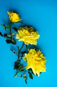 青に黄色いバラ
