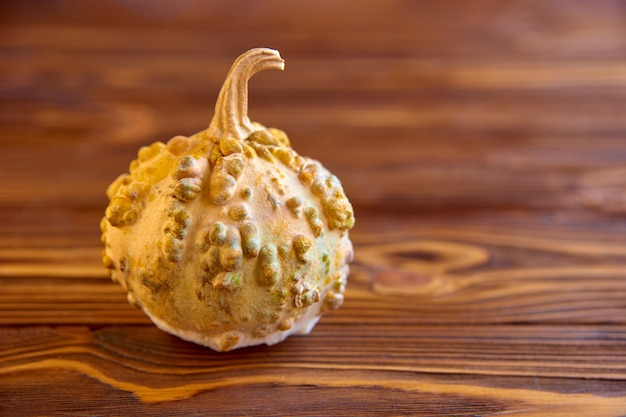 Yellow rotten pumpkin with warts on brown wooden scene