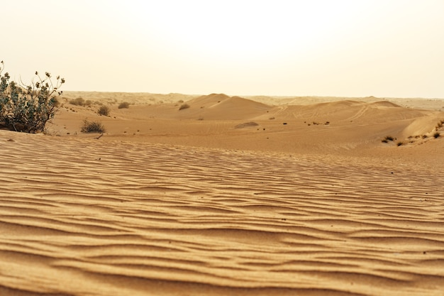Yellow sand dunes in dubai desert for a background