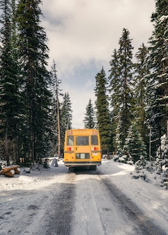 Yellow school bus driving in pine forest on winter