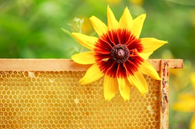 フレームの黄色の密封されたセル。成熟した蜂蜜と蜂蜜フレーム。アカシア蜂蜜でいっぱいのハニカムが付いた木製の小さなフレーム。