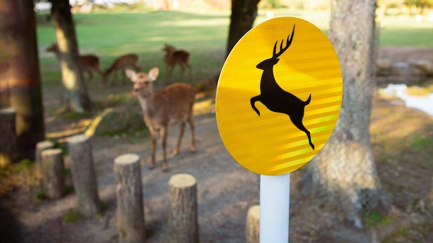 Yellow sign of deer live freely in a japanese nara park. a young wild sika cervus nippon during spring season. tourist attraction of japan. natural parks of the world.
