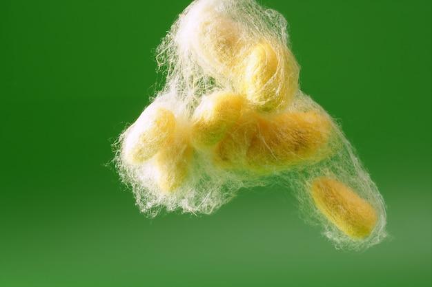Желтый кокон шелкопряда над зеленым