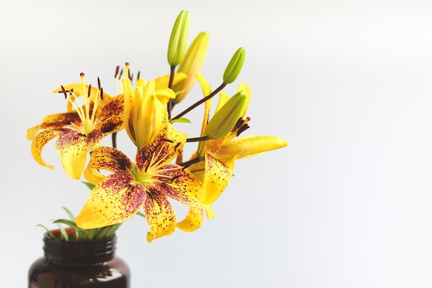 Yellow speckled lily in a dark vase on a white background