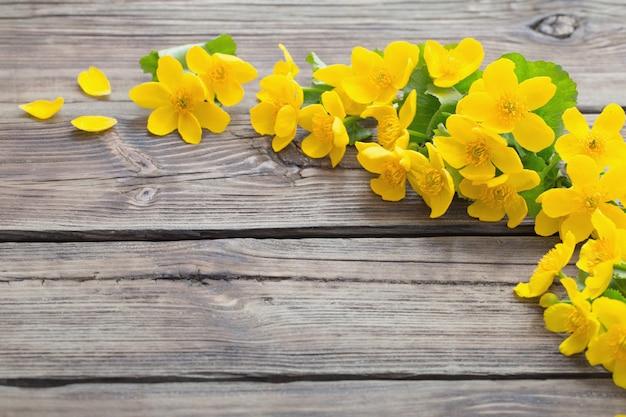 暗い背景の木に黄色の春の花