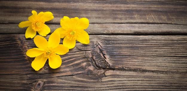 暗い木の表面に黄色い春の花
