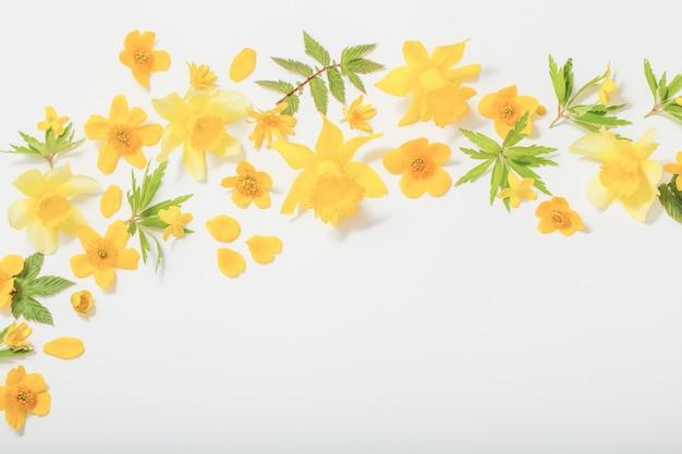 Желтые весенние цветы на белом