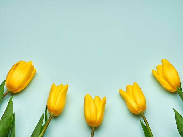 Yellow spring tulips on blue background, women's day copy space