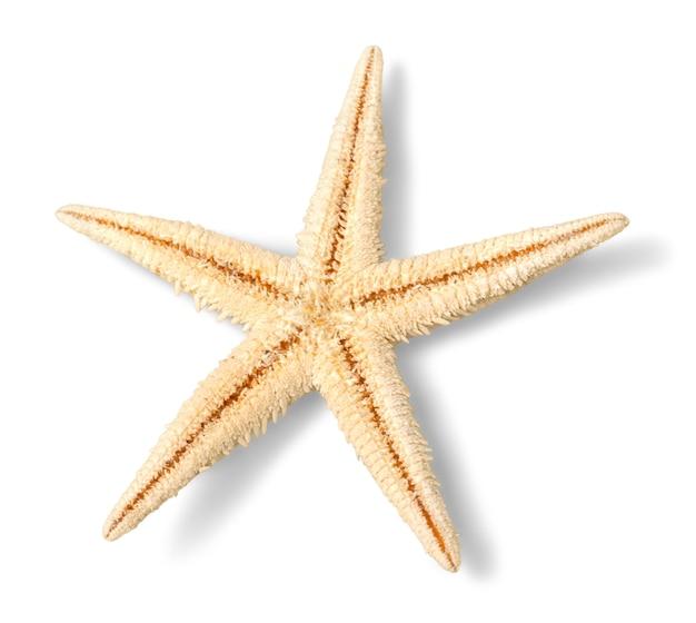 Желтая морская звезда, изолированные на белом фоне