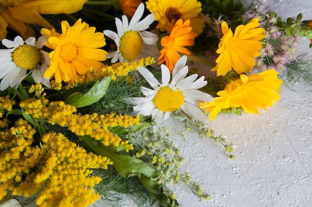 밝은 배경에 노란색 여름 필드 꽃입니다. 약용 식물