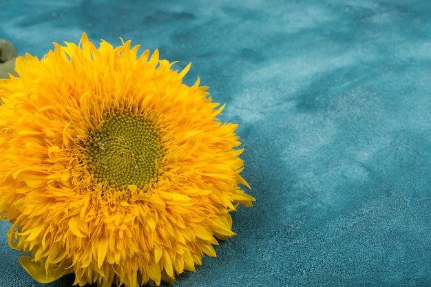 Yellow sunflower on a blue and green marble