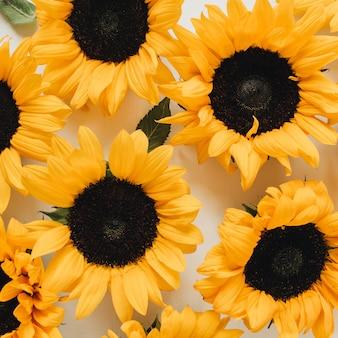 흰색에 노란 해바라기 꽃 봉 오리 패턴
