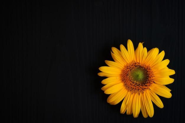어두운 배경에 노란 해바라기 꽃