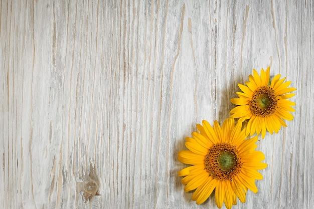 Желтые цветы подсолнуха на белом деревянном фоне