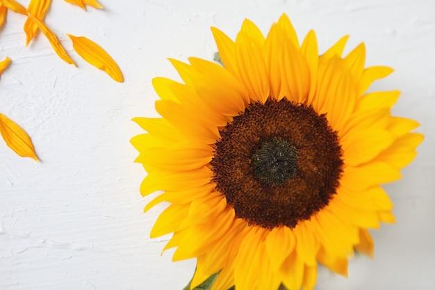 白い背景の上の黄色いヒマワリ。黄色いひまわりの花束、秋のコンセプト、上面図、テキスト用のスペース。白い背景で隔離。ひまわりが咲きます。明るい黄色の花