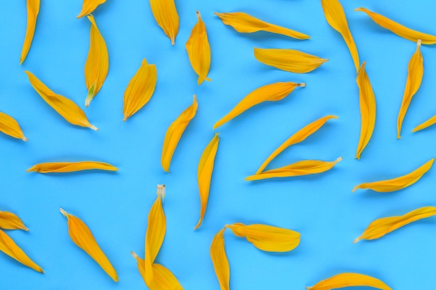 Yellow sunflower petals on blue paper background.