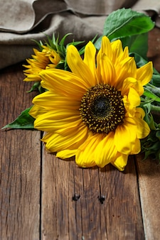 Yellow sunflower on wooden background