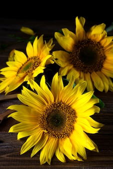 Yellow sunflowers with seeds