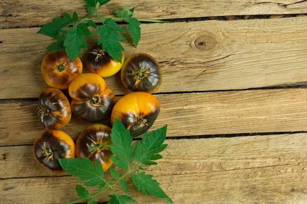 Желтые помидоры голубое золото на деревянных фоне. помидоры голубое золото на старом деревянном столе.