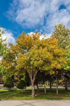Желтые деревья в общественном городском парке