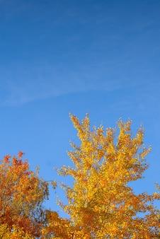 푸른 하늘 배경에 노란 나무입니다. 나뭇잎을 묻습니다. 가을 풍경