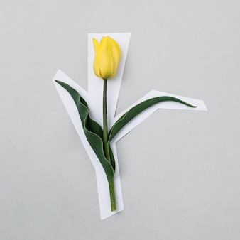灰色の背景に黄色いチューリップが、背景から切り取られたかのように白い紙で縁取られています。モダンなミニマルな春と休日のコンセプト。