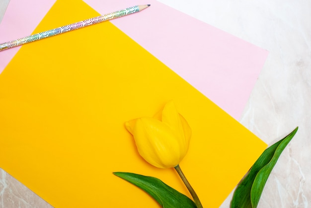 Yellow tulip, pencil and colorful paper on marble background