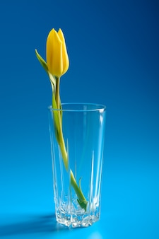 Yellow tulip in a vase