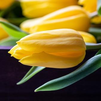 Желтый тюльпан с зелеными листьями на темном фоне концепция весеннего праздника