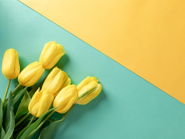 Yellow tulips on empty yellow green background with copy space.