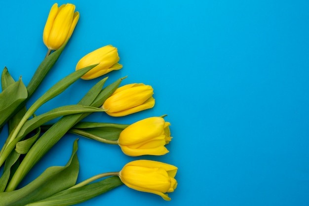 Yellow tulips flowers on a blue background. waiting for spring. happy easter card. flat lay, top view. copy space for text