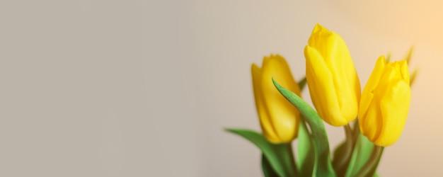 Yellow tulips flowers on grey background.